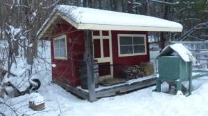 coop in winter 2013-14